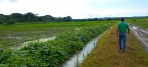 feature_arroz