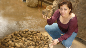 Maribel Murillo shows off a potato produced with EM during a meeting with the Producers of the West in Honduras.