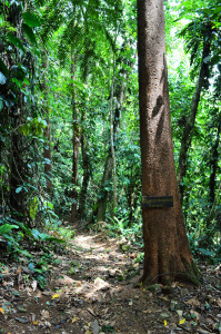 The dense tropical forest of La Cuna de Aves, located in the Las Lomas community of Costa Rica.