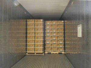 The boxes of fruit are set on pallets and loaded into trailers.