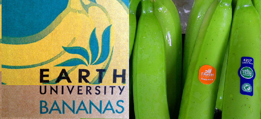 ¿Cómo llega el banano de la Universidad EARTH a tus manos? / How does a banana get from EARTH University in Costa Rica to your grocery bag?