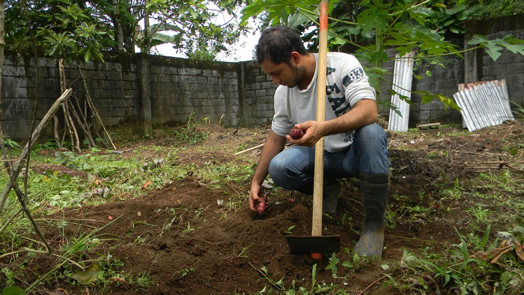 Luis works at the Nutritional Center, where he is in charge of managing the garden using the knowledge he has acquired at the University.