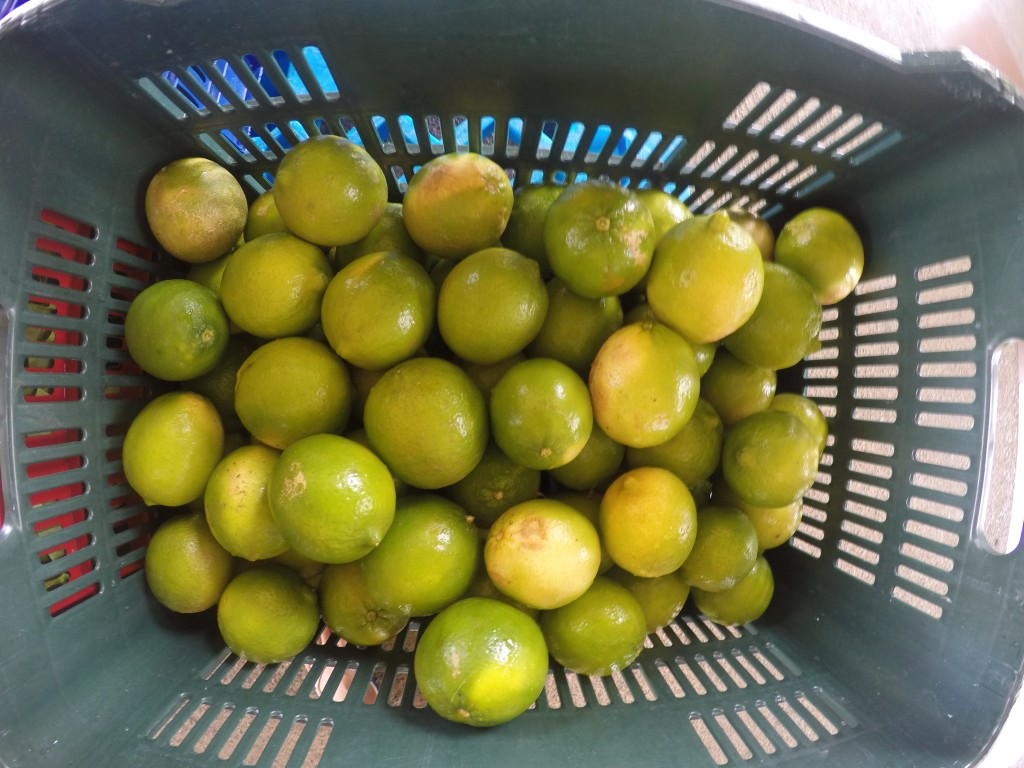 Fresh citrus produced in the University Academic Farm.