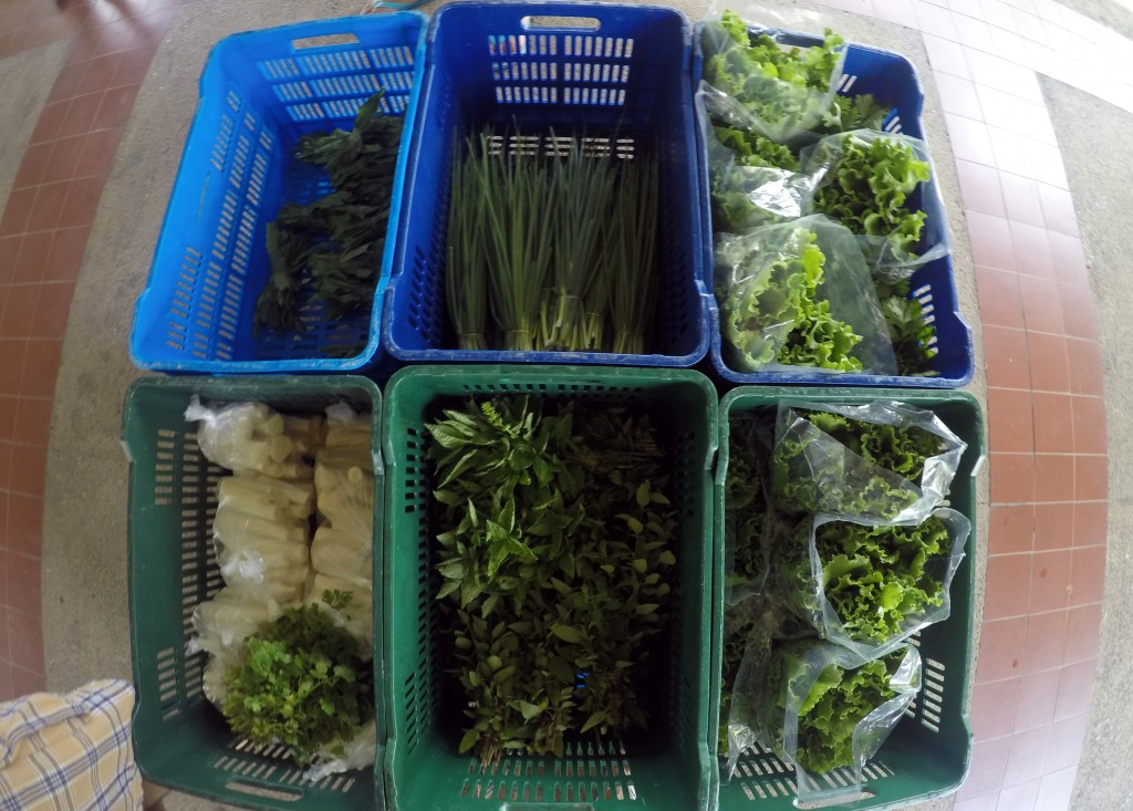 Fresh, green products