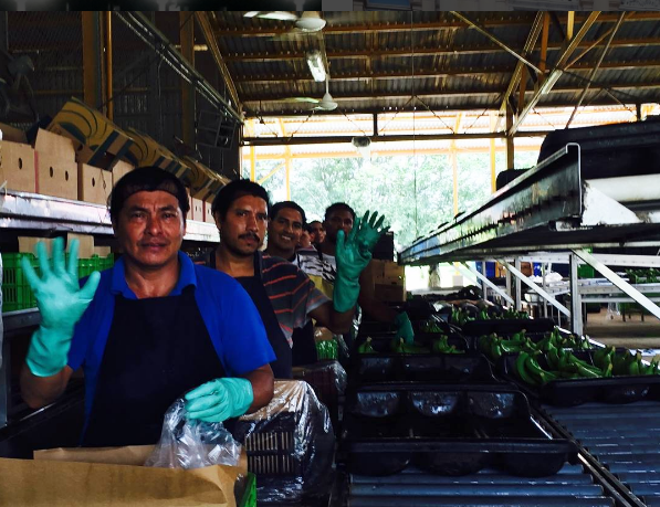 Some of the EARTH University's banana plantation workers