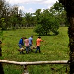 EARTH students meet at Hernandez's farm each Wednesday to plan and develop more sustainable agricultural methods.