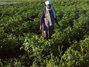 Esnath stands in the middle of her cropland. (Source: Esnath Divasoni)