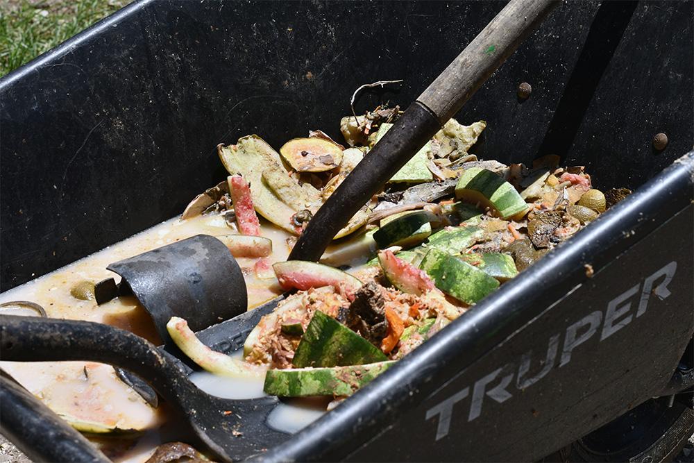 Los sobrantes de la comida que se sirve en cafetería se devuelven a la finca, se calientan y se dan como alimento a los cerdos, cerrando así un ciclo de aprovechamiento de residuos.