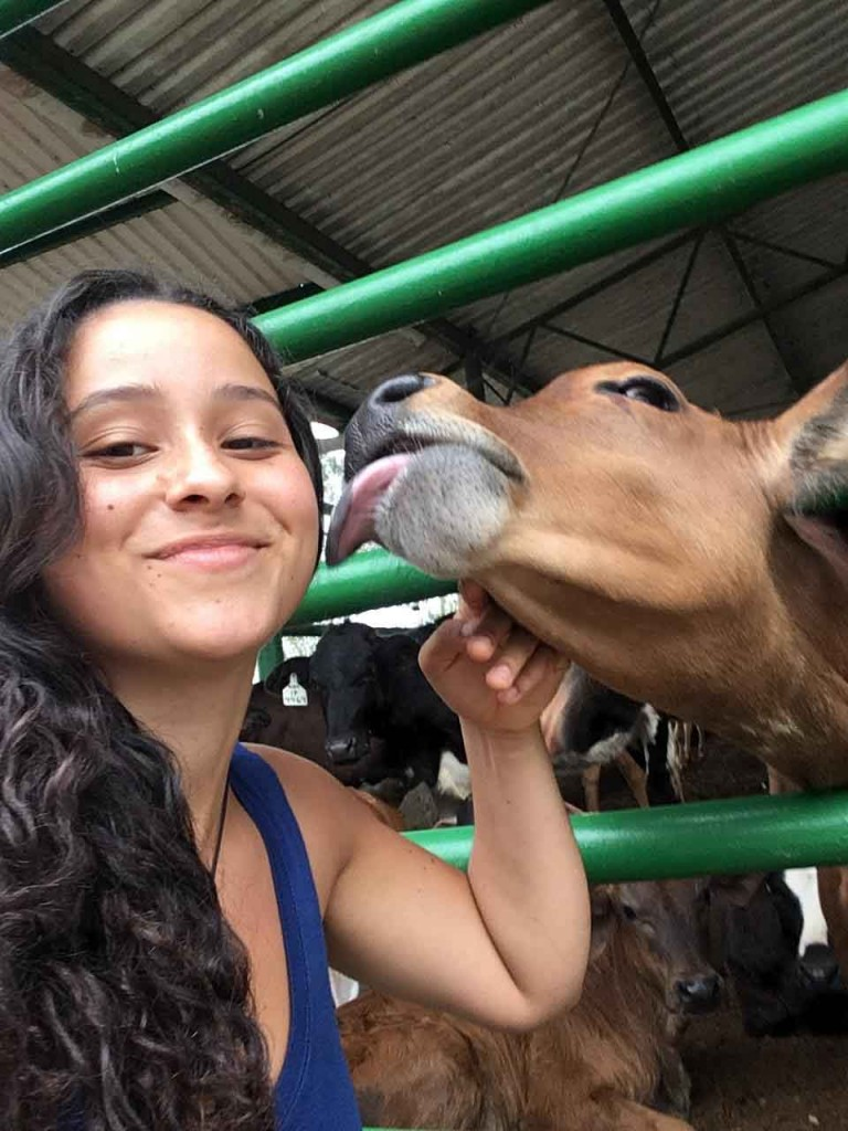 Kumsa enjoys a cow's kiss at one of EARTH's many research farms.
