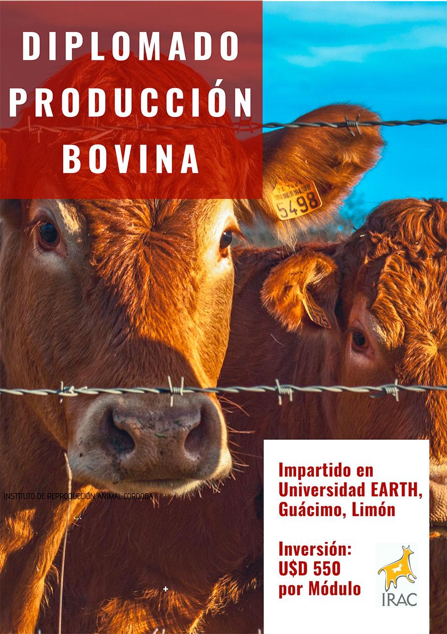 Diplomado en Producción Bovina