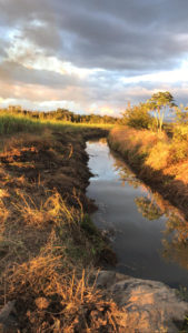 Canals have been recovered for the proper management of water resources.